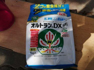 温かくなってきたら病害虫に注意!オルトランDXで対策しましょう。