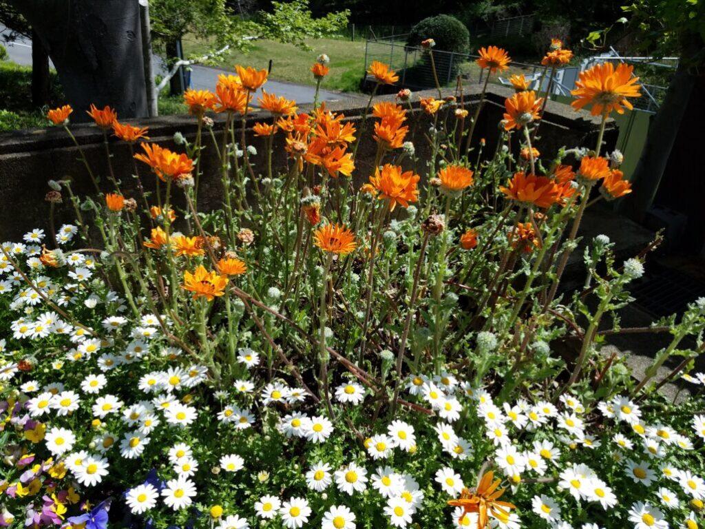 水戸市植物公園花壇