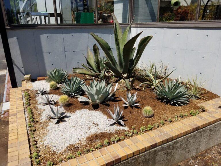 水戸市植物公園多肉花壇